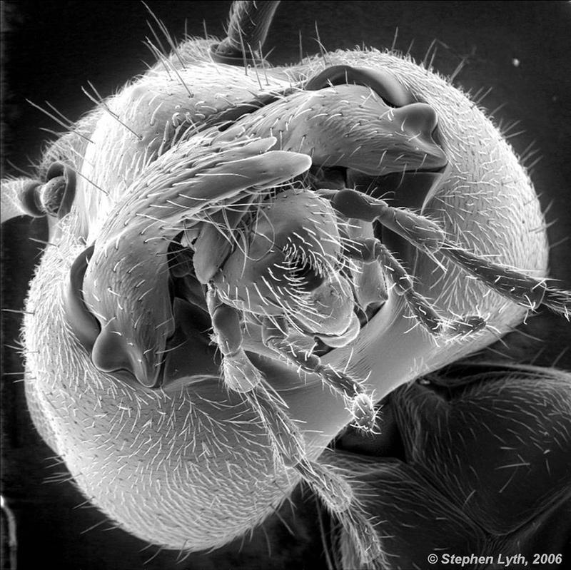16 تصویر وحشتناک از موجودات ریز میکروسکوپی